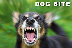 Utah Dog Bite Injury